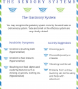 The sensory system printables guides